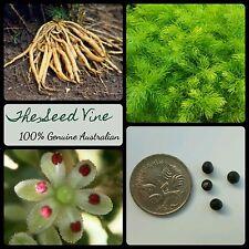 20 SHATAVARI PLANT SEEDS (Asparagus racemosus) Rare Indian Medicinal Ayurvedic