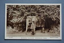 R&L Postcard: Burmese Elephant & Zoo Keeper Whipsnade Park Zoo Dunstable