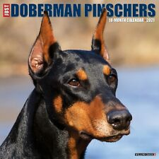 Just Dobermans (dog breed) 2021 Wall Calendar (Free Shipping)