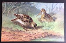 COMMON SNIPE POSTCARD Game Birds - Series 1 - TUCK'S Oilette 8781 Unposted 160