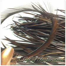10 x 14-20cm Dark Brown Dyed Goose Biots Feathers DIY Craft Millinery Races