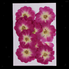 12pcs Pressed Real Chinese Rose Dried Flower for Jewelry Making DIY Crafts