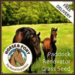 Horse Paddock Grass Seed - FOR PASTURE AND GATEWAY RE-SEED RENOVATION OR REPAIR