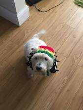 handmade crochet rasta hat dreadlocks pet cat dog puppy wig fancy dress costume