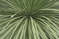 Garten Pflanzen Samen winterharte Zierpflanze Saatgut Staude Ziergras RAUHSCHOPF