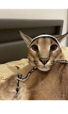 The Hat From Kimbothewildcat