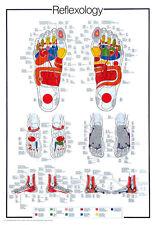 Huge REFLEXOLOGY Foot Reflex Pressure Points Info-Packed Wall Chart Poster