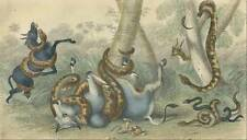 RATTLE SNAKE, ANACONDA, PYTHON  1860 painted engraving