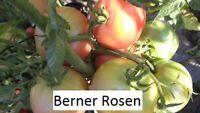 Berner Rosen Tomate 10 Tomaten Samen Ernte 2020 aus bio Anbau Nr.106