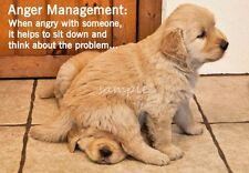 Funny GOLDEN RETRIEVER Puppies Anger Management Refrigerator Magnet 3 x 4.25
