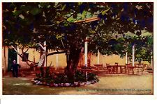 Vintage Postcard California Giant Grape Vine San Gabriel Mission Cal Pacific Nov