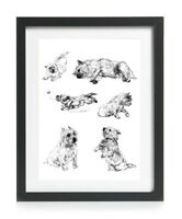 Cairn Terrier Dog Picture Art Print Poster Gift Vintage 1930's Reprint A4