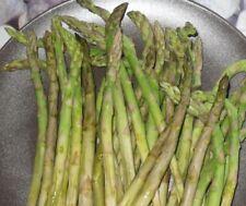 "min 100 Samen grüner Spargel ""Mary Washington"" (Asparagus officinalis)"
