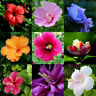 FT- 100Pcs Rare Giant Hibiscus Exotic Coral Seeds Home Garden Flowers Plant Deco