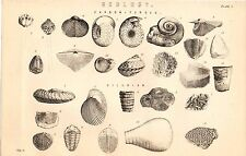 1868 PRINT ~ NATURAL HISTORY GEOLOGY ~ FOSSILS ~ CARBONIFEROUS ~ SILURIAN