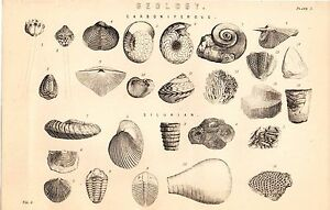 1868 Stampa ~ Naturale Storia Geologia ~ Fossili ~Carboniferous~ Siluriano
