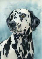 Dalmatian Dog Pet Portrait Watercolour Print from an Original Painting