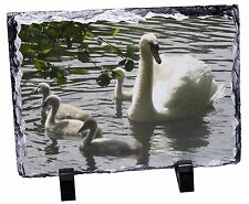 AB-S11JW Swans and Baby Cygnets Girls//Ladies Denim Purse Wallet Christmas Gift