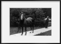 """c1909 photograph of Duke """"B"""" Summary: Man holding long tail of horse, which also"""