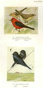 """Birds of Eastern Canada"" - SCARLET TANAGER & MARTIN"