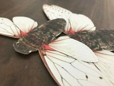 """Giant 9"""" Cicada Decal, Insect Sticker, Wall Art Decor, Realistic bug"""