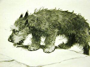 Cecil Aldin 1932 SCOTTISH TERRIER ON STEPS Art Matted