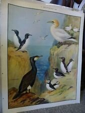 Vintage School Nature Education Poster No 12 Birds of the Rocky Coast R. Green