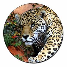 Jaguar Photo Slate Christmas Gift Ornament AT-4SL