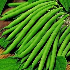 Vegetable Climbing French bean Cobra 80 seeds