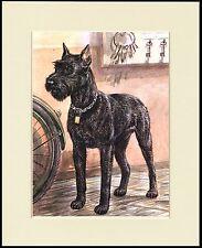 GIANT SCHNAUZER LOVELY DOG PRINT MOUNTED READY TO FRAME