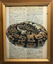 Vintage 1950s Dictionary Reptile Art Print  Collectible Ball Python Picture