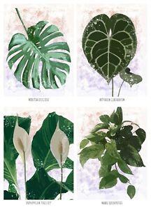 Prints Posters of Plants Botanical Leaf Floral Wall Art Decor Monstera Calathea