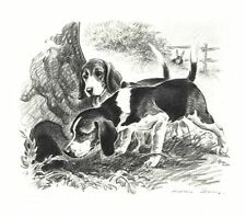 Beagle - Morgan Dennis Dog Print - Matted