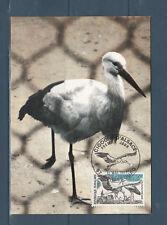 carte  1er jour  oiseau cigogne d' Alsace  67 Strasbourg   1973