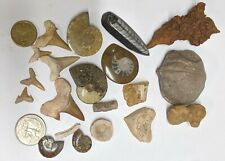 FOSSIL COLLECTION - Dinosaur Ammonite Shark Orthoceras Stingray Crynoid (#U308)