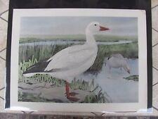 Original 1930  Rex Brasher #169 Hand Colored Bird Print  Snow Goose #169REX2 DSS