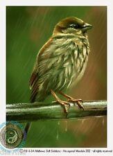 © ART - Sparrow Bird in rain Nature Wildlife Original Artist Print by Di