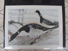 Original 1930  Rex Brasher #173a  Hand Colored Bird Print  Brandt #173aREX2 DSS
