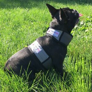 Cooler Dog Extra Small Cooling Vest and Collar