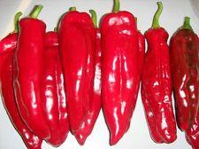 Italian Sweet Pepper - CORNO DI TORO RED - 20 Heirloom Organic Vegetable Seeds