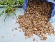 Gallon Bag #1 Mid-Air Catch Organic Oak Leaf Litter Terrarium Dart Frog Vivarium