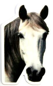 Cheval Magnet Aimant Animal avec Ardoise Magnétique Frigo + Stylo Marqueur B6a