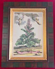 (Set of 9) TROWBRIDGE GALLERY Beautiful Framed Abraham Munting Botanical Prints