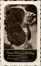 Birthday Dog Close-Up c1930 Real Photo Postcard #3 - English Spaniel
