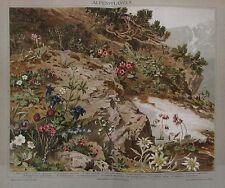 1892 ALPENPFLANZEN alter Druck Antique Print Lithografie Botanik