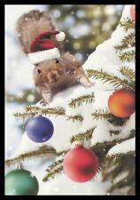 059-Msa Michael Quakenbush Squirrel Christmas Greeting Card New
