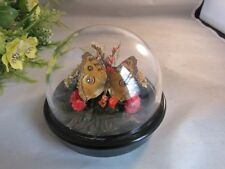 Vtg Real butterfly in display dome
