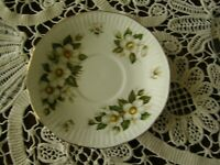 3863) Christmas Rose Cup Saucer Queen's Rosina Fine Bone China - England