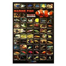 AZOO MARINE AQUARIUM FISH POSTER
