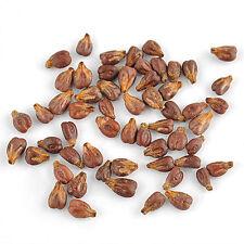Loam Temperate Climate Medium Watering Seeds & Bulbs